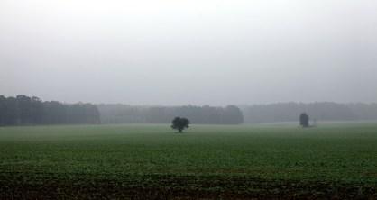 fields-1680832_1920