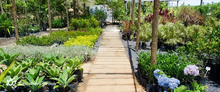 Jardinagem e paisagismo na bahia cascalheira garden for Empresas de paisajismo