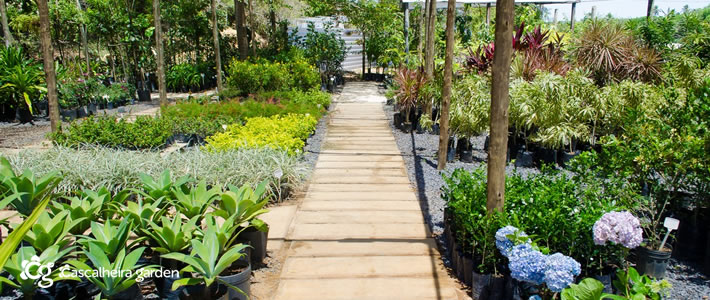 Serviços de Jardinagem e Paisagismo na Bahia! - Cascalheira Garden - Jardinagem e Paisagismo Camaçari