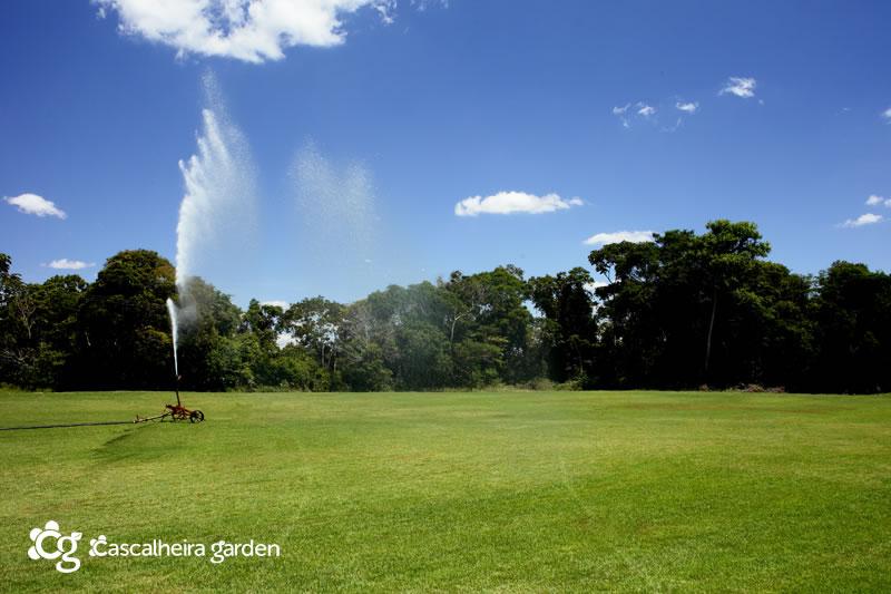 Foto: Cascalheira Garden - Grama Esmeralda em Tapete - Jardinagem e Paisagismo