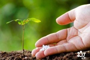 https://cascalheiragarden.com.br/adubos-e-fertilizantes-para-jardim/