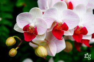 Orquídea---Plantas-Ornamentais---Cascalheira-Garden---Paisagismo-e-Jardinagem - Cascalheira Garden - Jardinagem e Paisagismo Camaçari