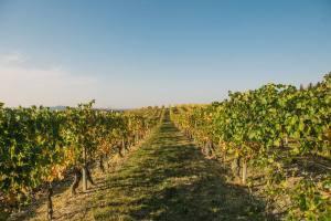 Contact Farmhouse Neive Wine Producer