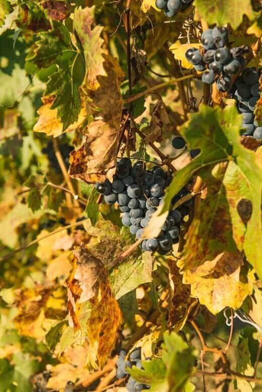 Visite Guidate degustazione vini Neive