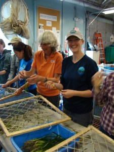 Restoring Nature's Nurseries of the Sea
