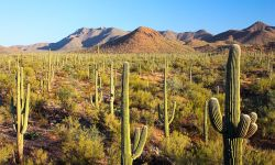 Saguaro National Park by Joe Parks