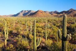 Saguaro National Park by Joe Parks