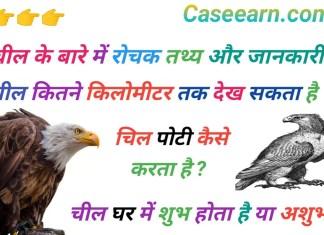 जाने चील के बारे में 10 रोचक तथ्य। चील इन इंग्लिश चील meaning in english. Eagle Facts in Hindi.