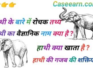 हाथियों के बारे में अदभुत व 25+ रोचक तथ्य! हाथी का वैज्ञानिक नाम। हाथी क्या खाता है ?