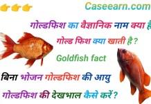 गोल्डफिश का साइंटिफिक नाम क्या है ? ok google gold fish ka scientific naam kya hai. goldfish ka scientific naam kya hai .