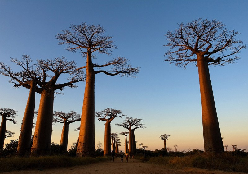 Avenue of the Baobabs, Countries for Kids, CASE OF ADVENTURE