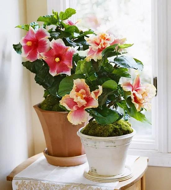 Cele mai frumoase plante de interior pentru relaxare