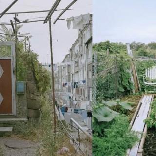 Gradinile urbane, o realitate fascinanta din lume