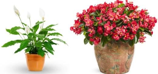 Plante care nu au nevoie de lumina acasa