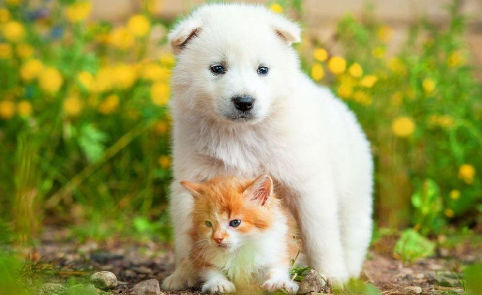 Lista plantelor toxice pentru caini si pisici din gradina