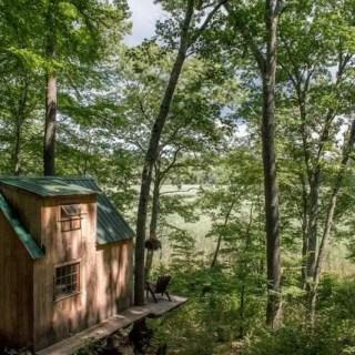 Casa de 4000 de dolari din padure