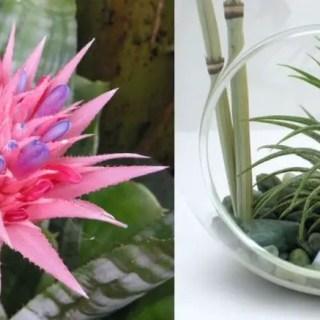 Plante care cresc fara pamant acasa