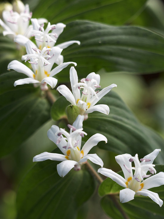 Cele mai frumoase plante perene de plantat la umbra in gradina
