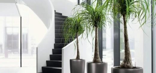 Sapte trucuri pentru plante de ghiveci sanatoase in casa
