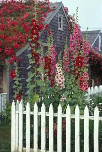 Amenajarea unei gradini de vis acasa