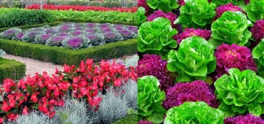 Cele mai interesante legume decorative din gradina