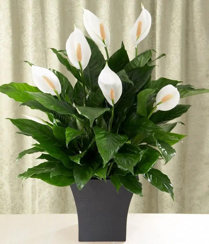 Plante potrivite pentru fiecare camera acasa