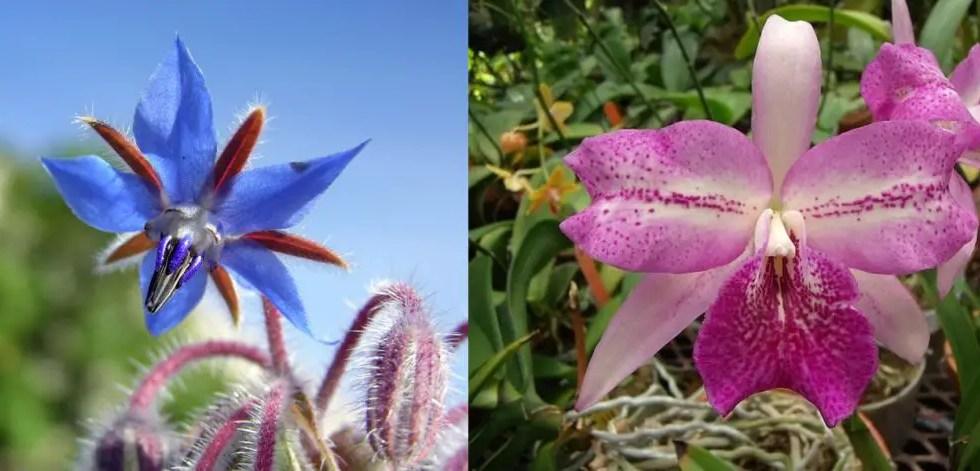 Flori specifice Greciei insorite