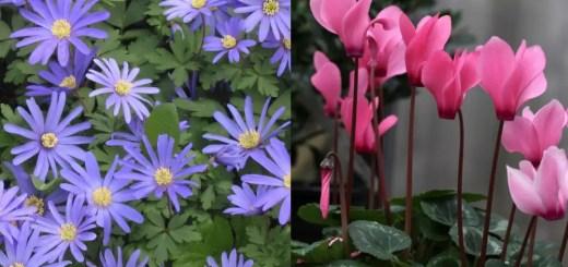 Plante care infrunta frigul iernii usor