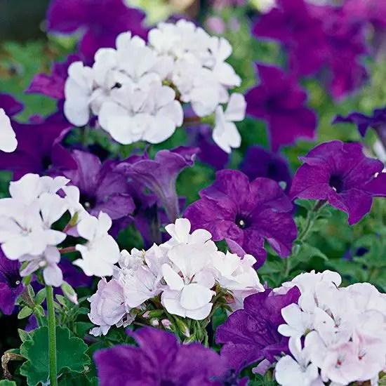 aranjamente de flori in gradina Garden floral arrangements 7