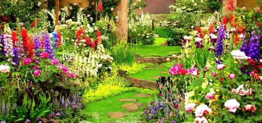 Aranjamente de flori in gradina frumoase