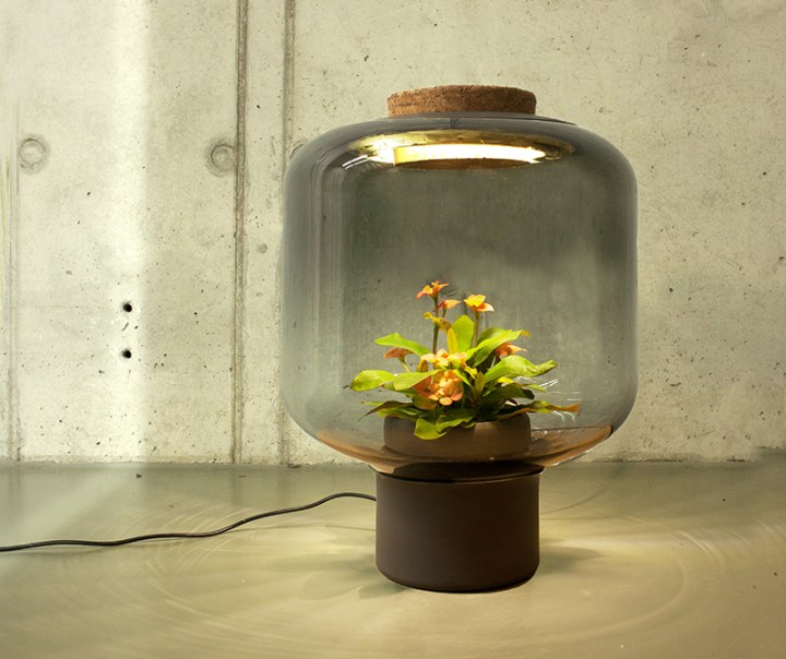 lampile in care cresc plante Plant growing lamps 5