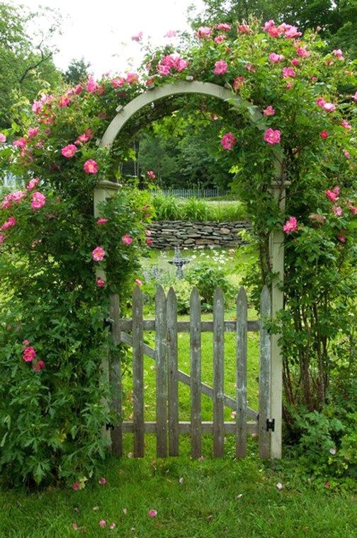 bolte pentru trandafiri cataratori Climbing rose trellis 7