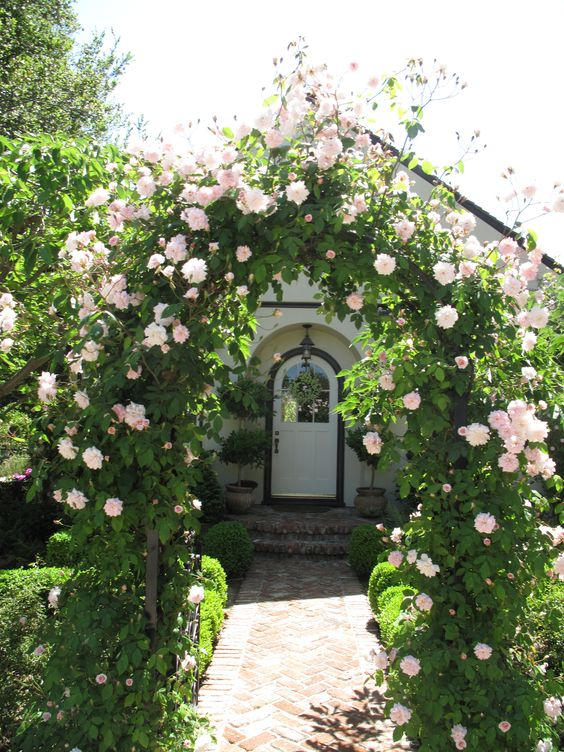 bolte pentru trandafiri cataratori Climbing rose trellis 9