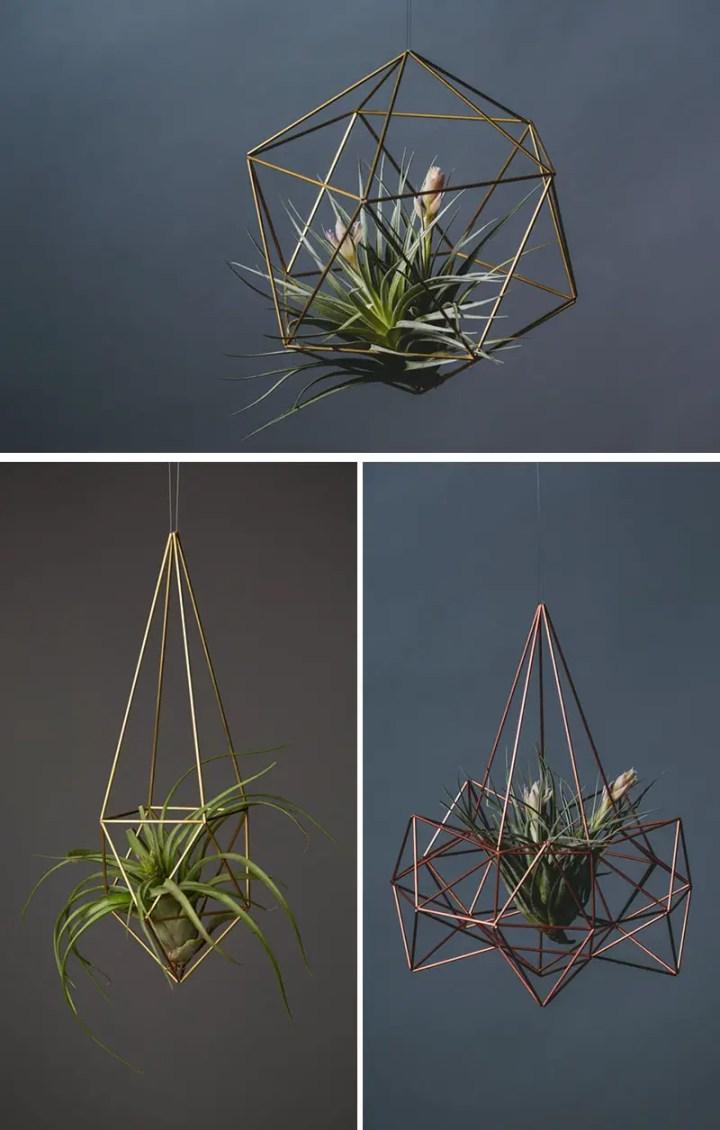 decoruri elegante cu plante care cresc fara pamant Elegant ways to display air plants in your home 10