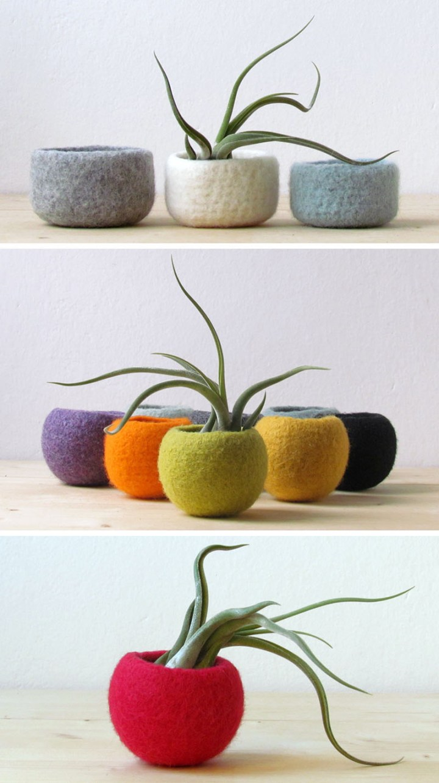 decoruri elegante cu plante care cresc fara pamant Elegant ways to display air plants in your home 9