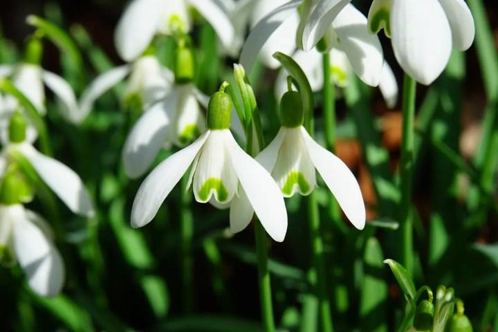 flori de pus toamna in gradina ghiocei