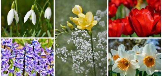 flori de pus toamna in gradina