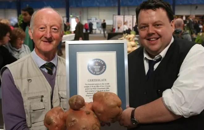 cele mai mari fructe si legume din lume cartof