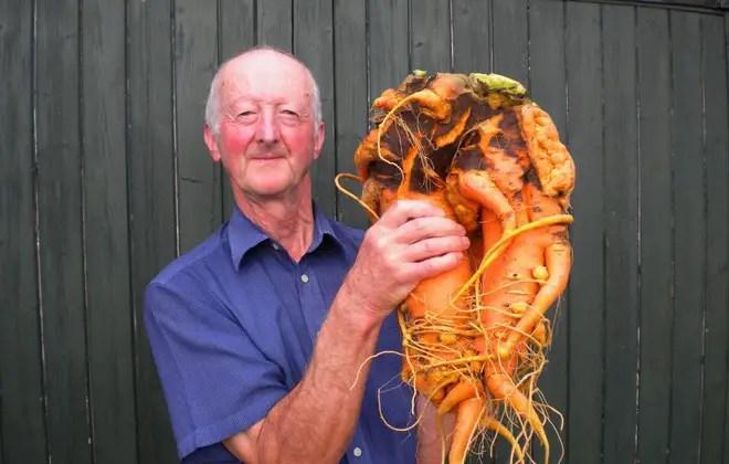 cele mai mari fructe si legume din lume morcov