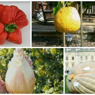 cele mai mari fructe si legume din lume