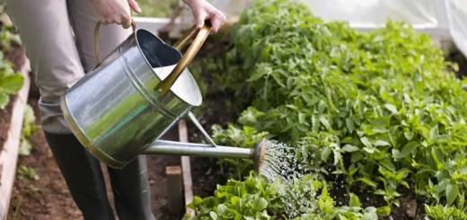 udarea gradinii de legume