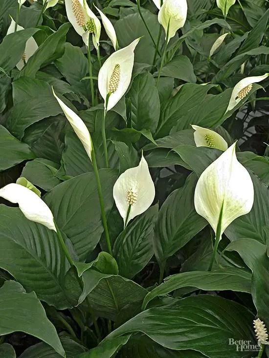 plante de interior care cresc la lumina slaba