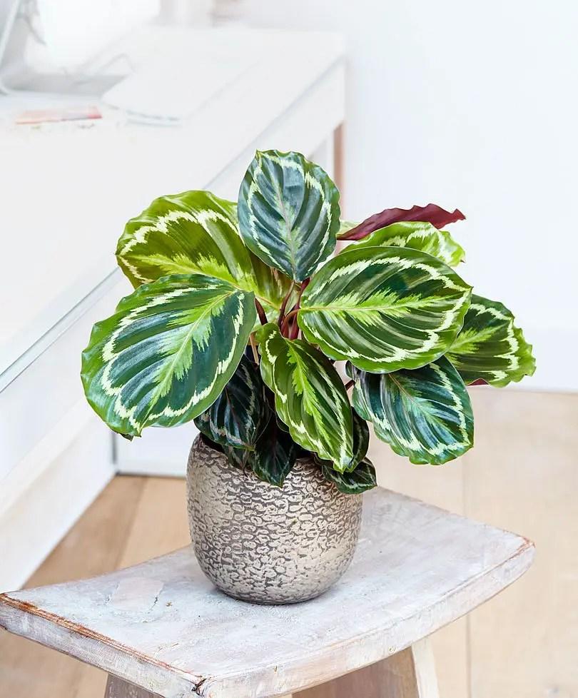 Plante de interior care nu au nevoie de lumina case practice for Plante de interior