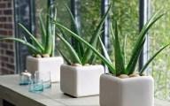 Aloe Vera in ghiveci. Cum o cultivi si cum o ingrijesti