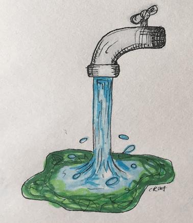 algae in ze water