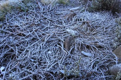 The Tanzania Chronicles — Day 4 — Frost