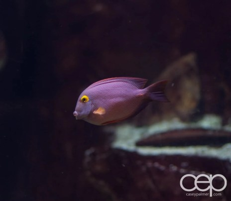 Fish at The Forum Shops at Caesar's Palace in Las Vegas, Nevada