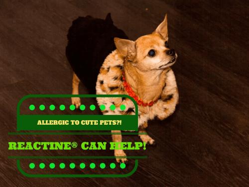 REACTINE® || Allergic to Pets?