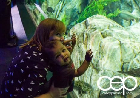 THE MONTHS OF 'BER — On Leave — Ripley's Aquarium of Canada — Sarah and Son Examining the Water