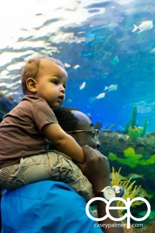 THE MONTHS OF 'BER — On Leave — Ripley's Aquarium of Canada — Casey and Son in the Dangerous Lagoon
